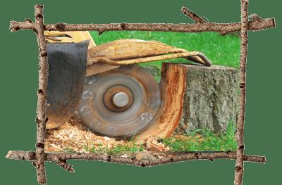 Tree Company Malvern