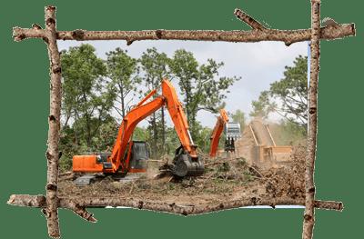 Malvern Tree Cutting