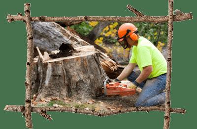 Malvern Tree Company