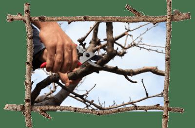 Tree Professional Malvern