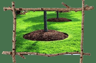 Arborist Malvern